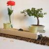 Plateau milieu de table cèdre blanc